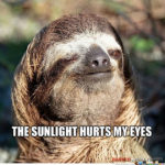 The sunlight hurts my eyes sloth gif